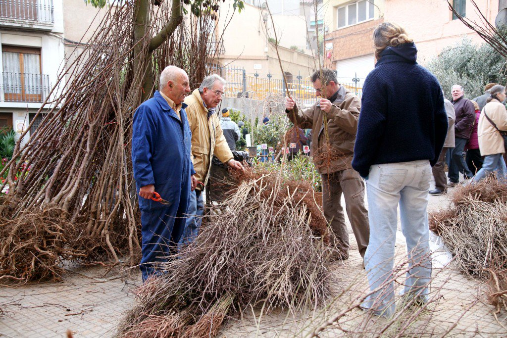Fira Candelera. Planters. Fot. Guillem Fotografs. Febrer'07-1785AMMR (11)