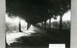 Ref. 5911. Vista del Passeig del Terraplè. 1950