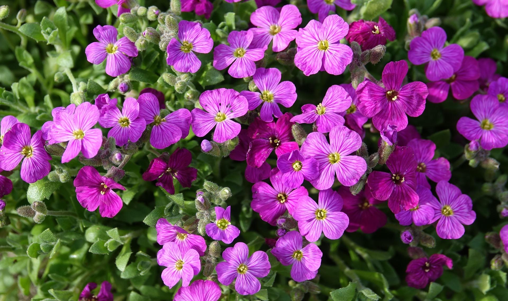 flower-3296397_1920